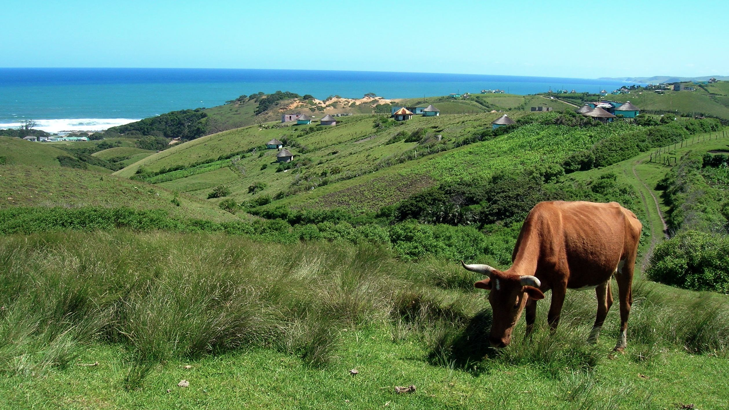 Grazing in the Transkei
