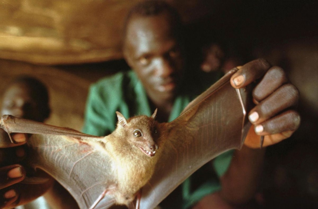 A Ugandan man displays a bat he captured for food December 1, 2000 in a cave in Guru Guru, Uganda. Bats are being studied as one possible carrier of the Ebola virus. (Photo by Tyler Hicks/Getty Images)